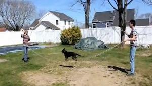 Ten pies uwielbia skakać na skakance, a nawet na dwóch. Nie wierzysz? Musisz to