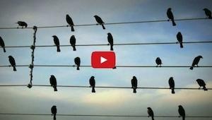 Zobaczył ptaki siedzące na liniach energetycznych. Nie spodziewasz się co zrobił