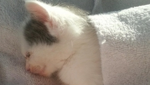 Chciano uśpić tego kotka, ona jednak postawiła go zatrzymać, wtedy stał się cud