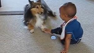 Nikt im nie wierzył, że ich pies wyprawia coś takiego z ich dzieckiem. Oto dowód