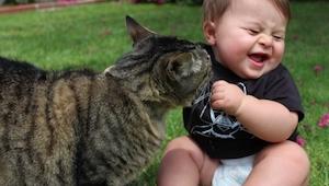 Koty udają twardzieli, a tak naprawdę mają ogromne serducho. Oto dowody