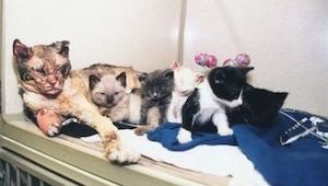 Oto historia kotki która przeszła 5 razy przez płomienie by uratować swoje młode