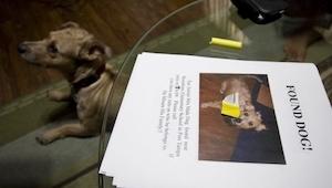 Znalazła psa pod przedszkolem. Chciała znaleźć jego właściciela lecz wtedy stał