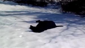 Postanowił nagrać psa bawiącego się na śniegu, zamiast tego wyszło coś wspaniałe