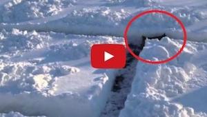 Wybudowali labirynt śnieżny dla swojego psa, gdy wbiegł do środka pękli ze śmiec