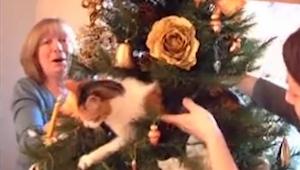 Próbowała ściągnąć kota z choinki, jego reakcja? Bezcenna!