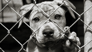 Kobieta myślała, że ratuje psa, jednak sposób w jaki widział to pies jest bezcen