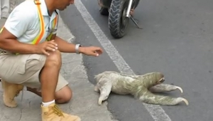 Mężczyzna zobaczył dziwne zwierzę na drodze i postanowił zrobić coś dobrego dla