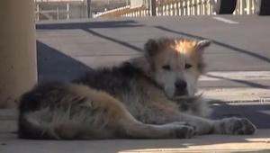 Drugie życie bezdomnego psa - zobacz, jak zmienia się pies, o którego ktoś się t