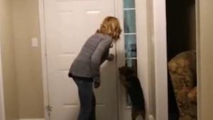 Nie uwierzysz, co ten pies zrobi na widok swojego pana po dwuletniej rozłące!