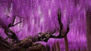 16 najwspanialszych drzew z całego świata.