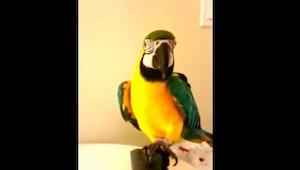 Nikt nie mógł przewidzieć, że papuga będzie cieszyć się czymś takim! Trochę to d