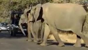 Zatrzymali swoje samochody na widok słonia, który zrobił coś niesamowitego!