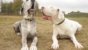 Wyglądają jak dwa zwyczajne psy, ale gdy przyjrzałam się bliżej... Nieprawdopodo