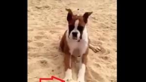 Zabrała psa na plażę. To, co tam znalazł i co z tym zrobił, wywołało mnóstwo śmi