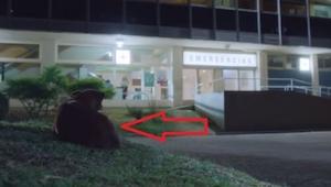 Ten pies czeka na swojego właściciela, który jest w szpitalu. Nagła zmiana sytua