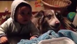 Chciała by jej syn powiedział MAMA, jednak to co zrobił pies zaskoczyło wszystki