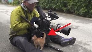 Fotograf chciał zrobić zdjęcie bezdomnym kotom, wtedy podszedł do niego mały kot