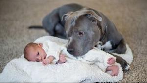 Bał się że pies jego żony skrzywdzi jego córeczkę, to co stało się potem odmieni