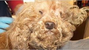 Ratownicy zgolili mu włosy, a wtedy odkryli coś strasznego. Zbiera się na płacz