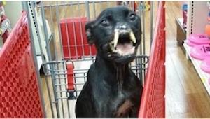 Żaden pies nie powinien nigdy doświadczyć takiego okrucieństwa jak ten biedny pi