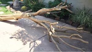 Zabrała ścięte drzewo do domu. Gdy zobaczyłam, po co to zrobiła, też tego zaprag