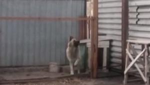 Pies usłyszał muzykę, to co zrobił jest świetne
