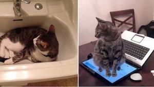 To, co wyrabiają te koty, nie mieści się w głowie! Tutaj naprawdę zabrakło logik