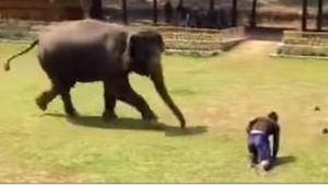Opiekun słonia upada na ziemię. Co robi słoń? Niewiarygodne!
