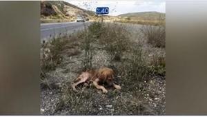 Umierające przy drodze szczenię było przez kilka dni ignorowane przez wszystkich