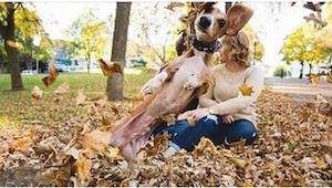Zazdrosny pies próbował udaremnić sesję zdjęciową z zaręczyn swoich właścicieli.