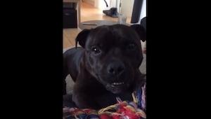 Pies nie może doczekać się zabawy... Padniecie ze śmiechu, gdy go usłyszycie!
