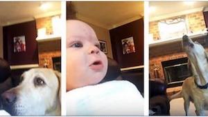 Jego psy zachowywały się zdecydowanie za głośno, więc dziecko postanowiło je uci