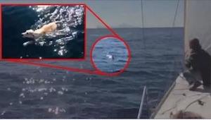 Byli na morzu, gdy zobaczyli, że coś do nich płynie... Nie uwierzycie własnym oc