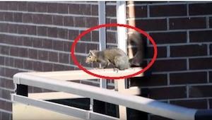 Filmował wiewiórkę, gdy niespodziewanie zrobiła coś, co nie mieści się w głowie!