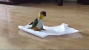 Dali papudze papierowy ręcznik - jej reakcja jest świetna!