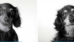 Jak starzeją się psy: piękny i wzruszający projekt fotograficzny.