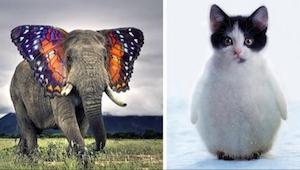 20 zwierzęcych hybryd, w których się zakochasz!