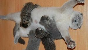 15 dumnych kotek ze swoim potomstwem - te zdjęcia sprawią, że się uśmiechniesz!