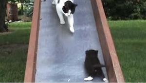 Te kotki chyba zmówiły się, by doprowadzić swoją mamę do szału! Zobaczcie, co ro