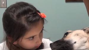 Dziewczynka popatrzyła się w oczy umierającego psa, to co stało się potem jest c