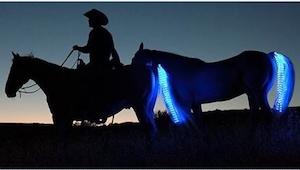 Pewna kobieta wymyśliła specjalne światła dla koni, by zwiększyć bezpieczeństwo