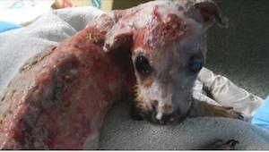 Historia tego skrzywdzonego psiaka sprawiła, że się popłakałam, ale... jego urat