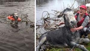 Uratowali osła, który się topił. Jego reakcja jest genialna!