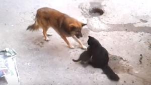 Pies podszedł do kociej mamy z małymi, to co stało się później poruszy każdego
