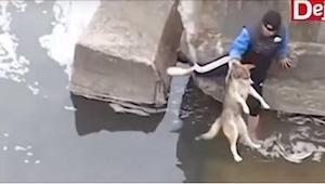 Ten mężczyzna uratował psa, który nie mógł się wydostać z rzeki. Reakcja zwierza