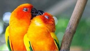 Galeria zakochanych zwierząt - po niektórych nie spodziewaliśmy się takiego roma