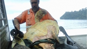 To, co ten mężczyzna zrobił z żółwiami, jest niesamowite! Musicie to zobaczyć.