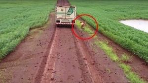 Pies biegł za samochodem przez 16 kilometrów. Powód porusza do łez...