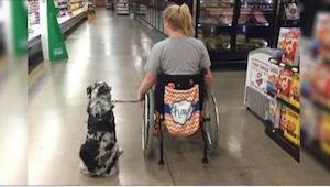 Nigdy nie próbujcie głaskać psa opiekuna! Zobaczcie dlaczego nie wolno tego robi